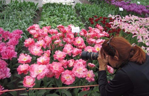 woman takes tulipe photo in keukenhof