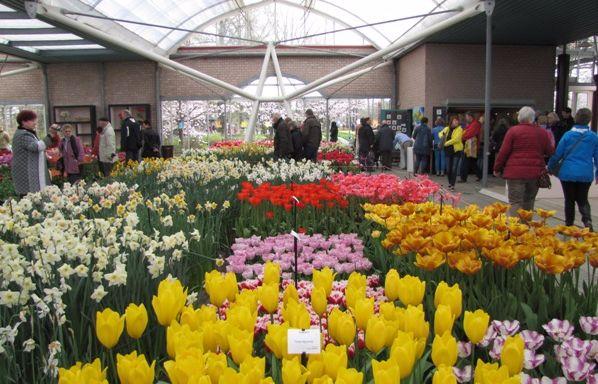pavilion-vystavka tulpanov v keukenhof dutch